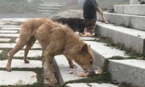 Vague d'euthanasies liées au Coronavirus : protégeons nos animaux !