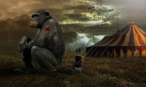 STOP aux cirques avec des animaux sauvages à Caen