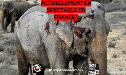 Pétition : INADMISSIBLE : Joy Gartner autorisé à se produire en France avec ses éléphantes !