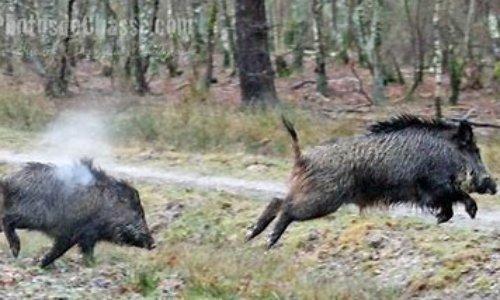 STOP aux dérives de la chasse