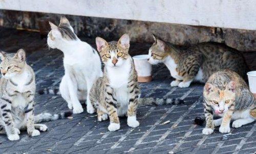 Le maire d'IDS SAINT ROCH veut faire euthanasier les chats errants de sa commune
