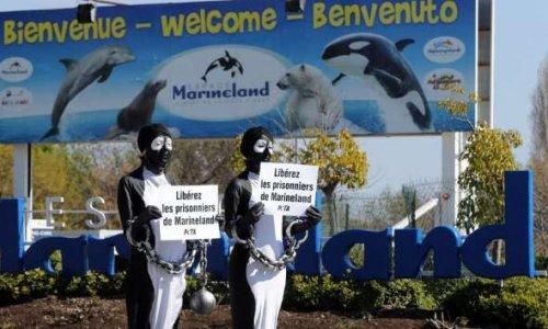 Un sanctuaire pour les animaux marins nés en captivité en France