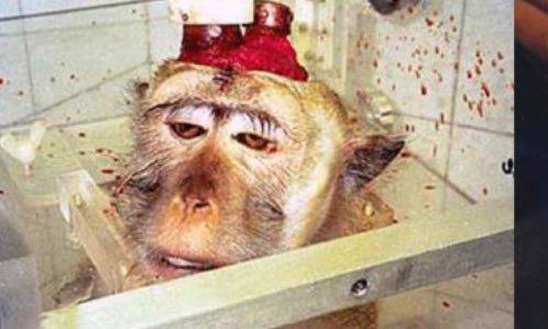 Stop aux expérimentations sur les animaux !