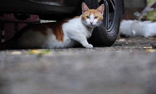 Stérilisation des chats abandonnés à La Baule !