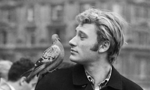 Dites STOP au piégeage cruel des pigeons de Saint-Aulaye (24410)