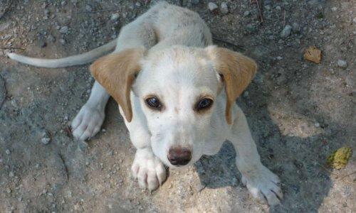 Mettons fin aux abattages des chiens errants partout au Maroc