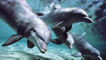 Pétition : Arrêtez le massacre des dauphins sur les îles Féroé!