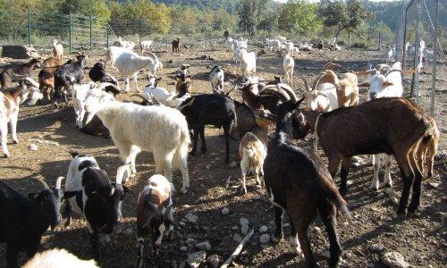Pétition : Déménagement d'un refuge pour le sauvetage d'animaux de ferme et de compagnie