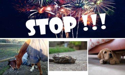 Pétition : Les feux d'artifice, source de stress, de pollution et de mort de nombreux animaux, INTERDISONS LES !