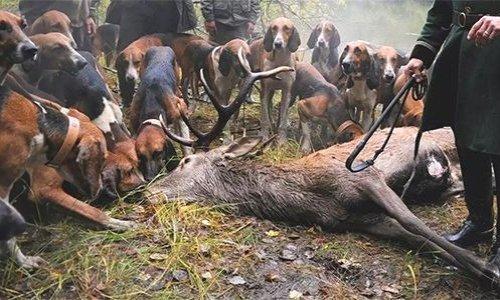 Pétition : ABOLITION de la chasse à courre en 2020