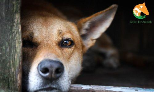 Pétition : Mauvais traitements sur animaux, trop c'est trop, la justice doit agir rapidement !