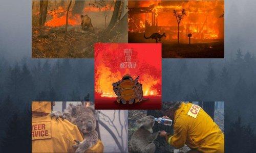Sauvons les animaux australiens piégés par les flammes !