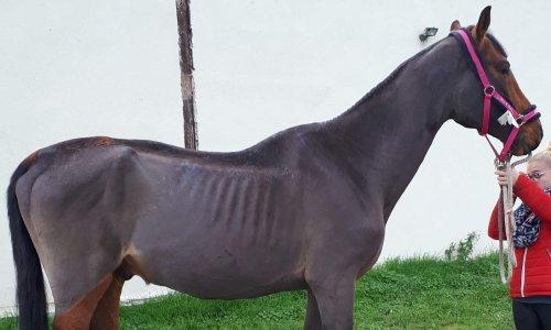 Pétition : Sauvons les chevaux de la maltraitance