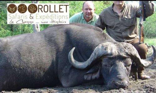 Pétition : Stop à la chasse en safari
