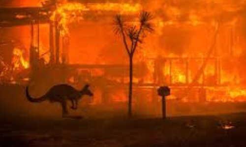 Poème : sauvons les arbres et animaux d'Australie