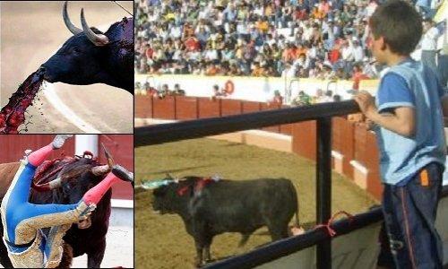 Pétition : Soutenons l'interdiction des corridas aux mineurs