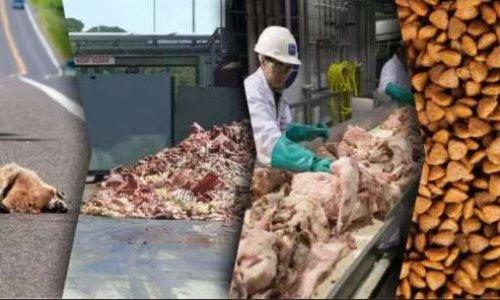 Contre l'alimentation animale à base de farine