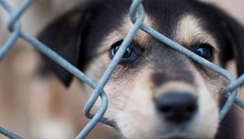 Pétition : Aidons les animaux et protégeons-les !