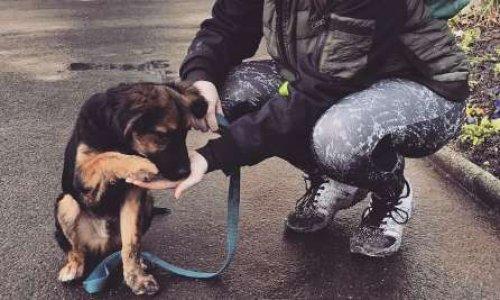 Création d'un refuge pour animaux à Rethel