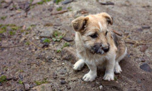 Stop à la maltraitance des chiens détenus par un chasseur en Dordogne