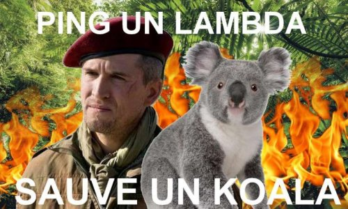 Signez pour sauver les koalas d'Australie. Une signature pour Lambda = un koala sauvé