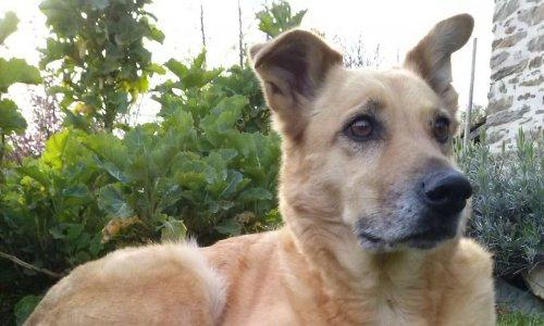 Pétition : Justice pour ma chienne Gaia, dévorée sous mes yeux par les 3 chiens de mes voisins (50)