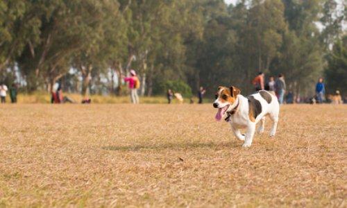 Pour la création d'un parc à chiens à Lons-le-Saunier