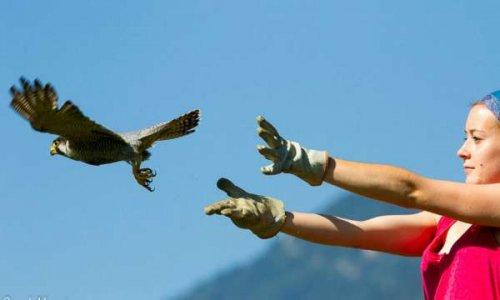 Aidons les centres de sauvegarde de la faune sauvage
