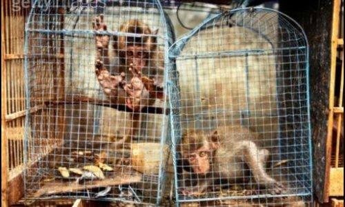 Pétition : Condamner lourdement les trafiquants d'animaux sauvages