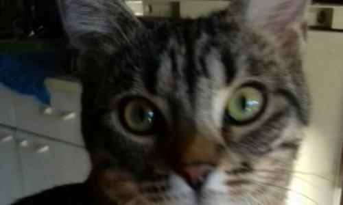 Pétition : Justice pour ce chat laissé pour mort entre 2 murs : durcissons la loi !