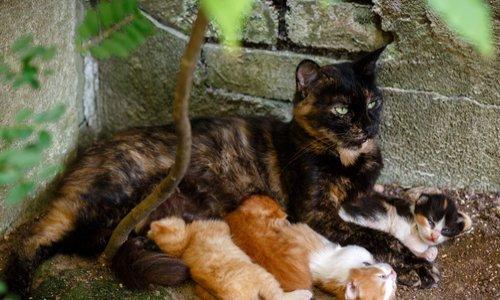 STOP à l'inaction du maire envers les chats errants de Chateauroux