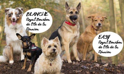 Pétition : Pour vous, les chiens créoles et les Royal Bourbon ne valent-ils pas un rond ?