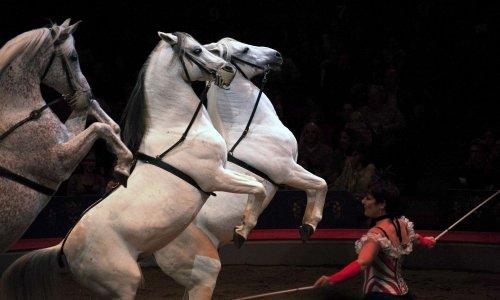 Contre les cirques avec animaux sauvages à Fontainebleau
