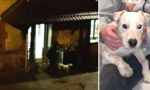Pétition : Vidéo : Justice pour le petit chien roué de coups par un vétérinaire de Vironvay et destitution définitive de ses fonctions.