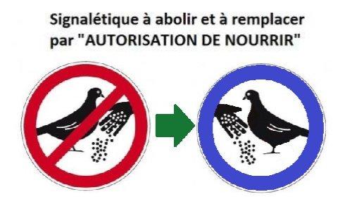 Oiseaux : nourrir ou pas nourrir ? Alarmante disparition des oiseaux.