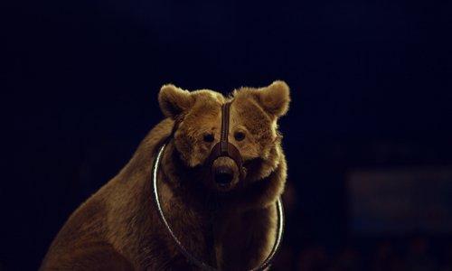 Pétition : Ne plus accepter d'animaux sauvages dans les villes comme les festivals de rues, et les cirques !