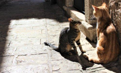 Pétition : ALERTE MAIRIE DE NICE  ! ASSOCIATION ET BÉNÉVOLES DEMANDENT EN URGENCE le contrôle des chats errants