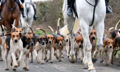 Pétition : Mise en placement judiciaire des 62 chiens de chasse de M. Sébastien Van Den Berghe