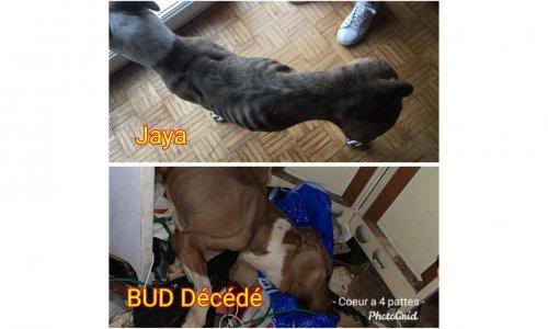 Justice pour Bud et Jaya