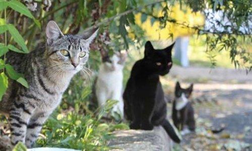 Élections municipales 2020 : faisons entendre la voix des chats errants du Vexin