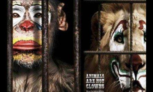 Contre les cirques avec des animaux à Toulouse