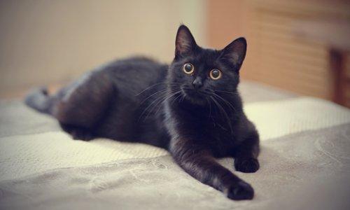 Justice pour le pauvre chat jeté contre un mur et euthanasié après une dispute conjugale !