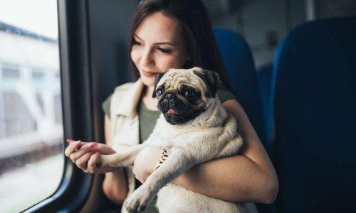 WC dans les gares interdits aux propriétaires de chiens ?