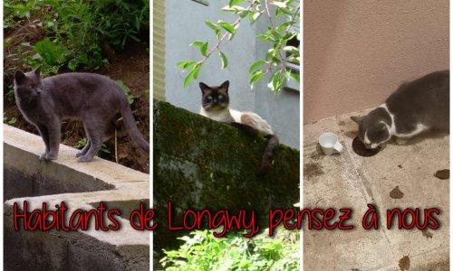 Municipales 2020 : entendons les miaulements des chats errants du bassin longovicien