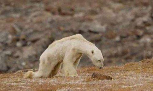 """Poème """"L'ours blanc"""": Appel pour agir, enfin, vraiment, urgemment, contre le réchauffement climatique"""