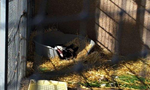 Amélioration des conditions de détention des animaux du jardin Olbius Riquier
