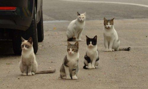 S.O.S Mairie d'Auch, stérilisation des chats errants des Grisons