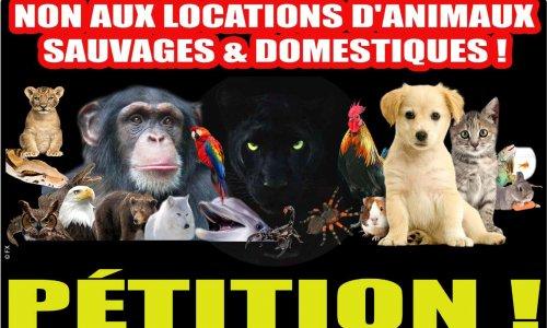 NON AUX LOCATIONS D'ANIMAUX SAUVAGES & DOMESTIQUES !