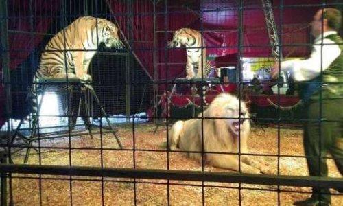 Non aux animaux dans les cirques en Guadeloupe