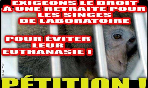Exigeons le droit à une retraite pour les singes de laboratoire pour éviter leur euthanasie !